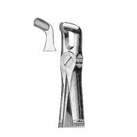 146 Cleste molar minte inferior